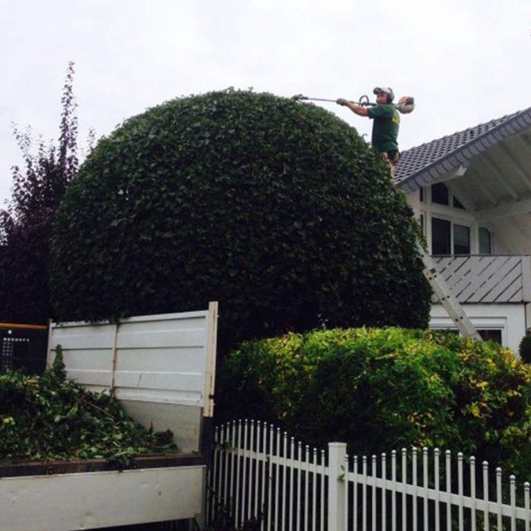 Pielęgnacja ogrodów 2